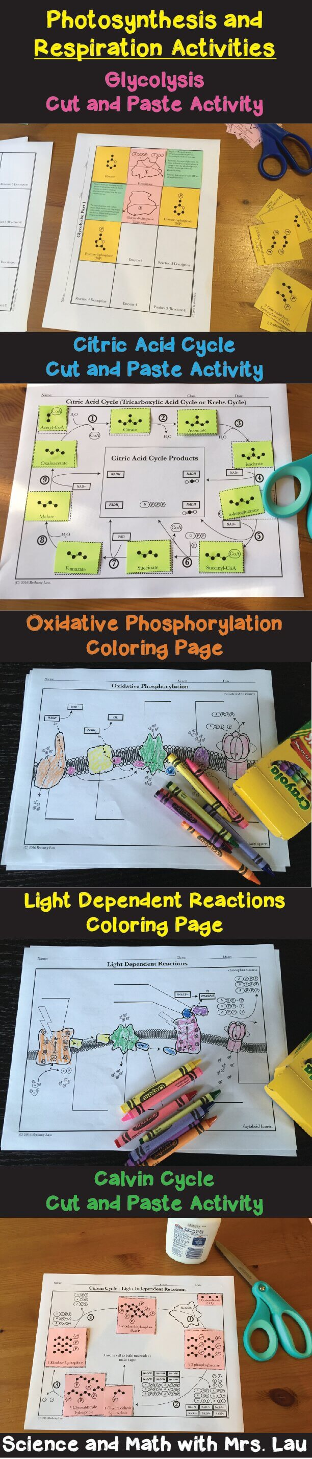 Teaching Photosynthesis and Cell Respiration with Activities