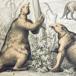 1862-giant-ground-sloth-megatherium-paul-d-stewart