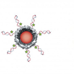 Ms2 Viral Capsids. Image: Francis Research Group