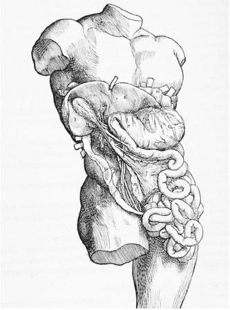 A SIXTEENTH-CENTURY ANATOMICAL DIAGRAM OF THE INTERNAL ORGANS, SHOWING THE STOMACH, LIVER, INTESTINE, AND GALLBLADDER. (© Corbis. Reproduced by permission.)