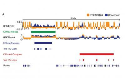 Possible links: Epigenetics, aging, nucleus protein mutations to cancer, rare disorders