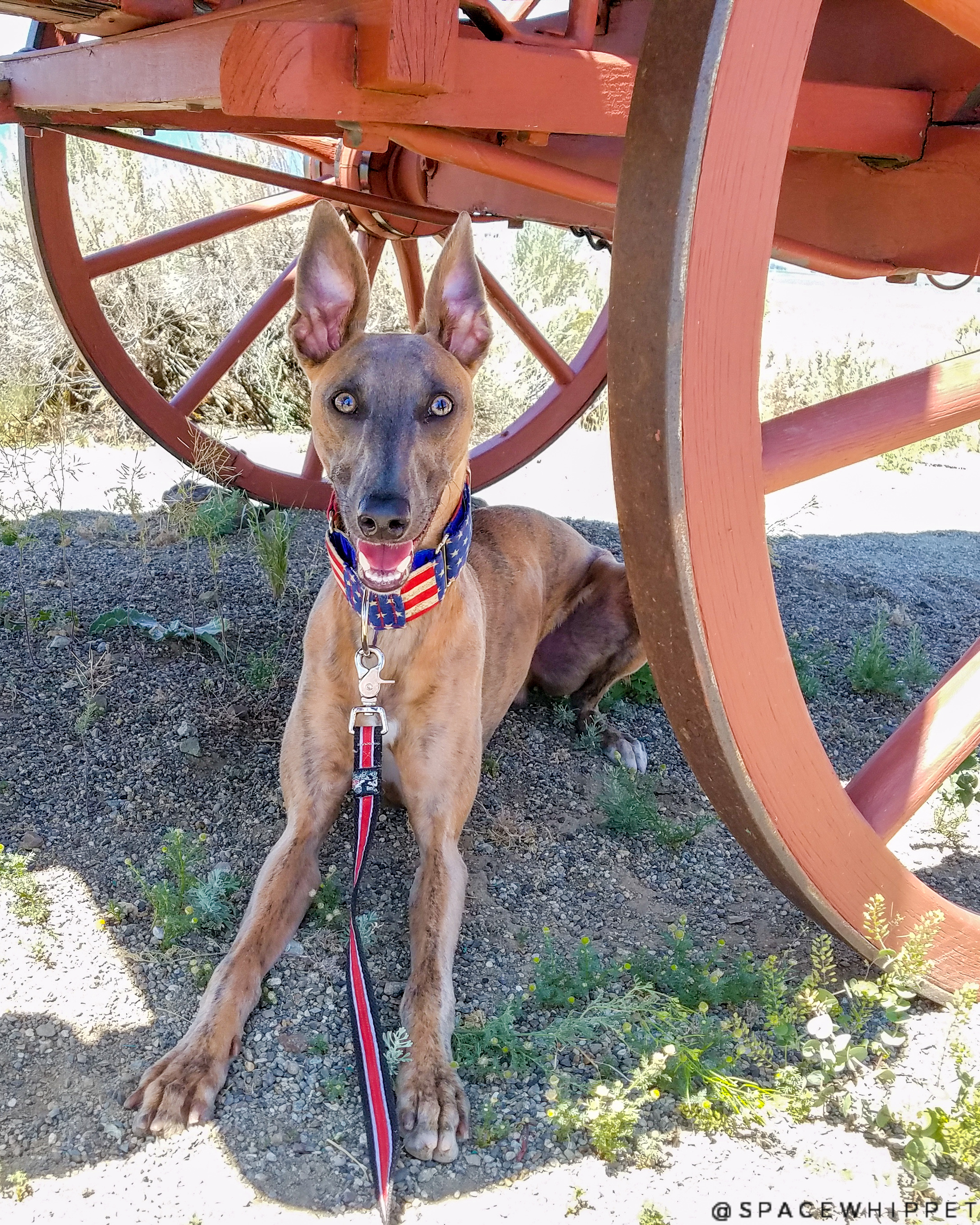 Kuiper relaxes under a covered wagon.
