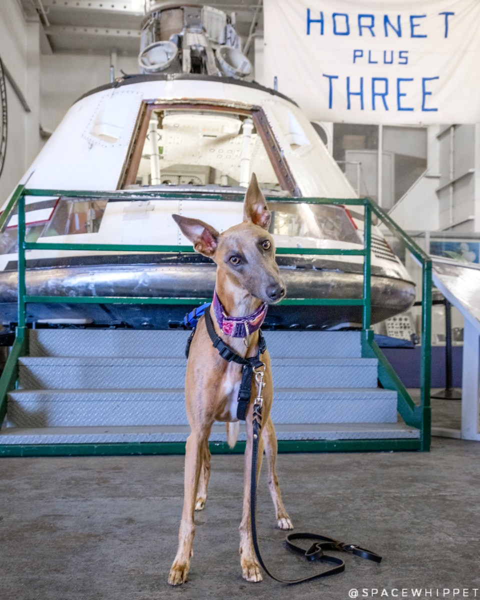 """Kuiper poses with the AS-202 command module, used for unmanned testing. A """"Hornet Plus Three"""" banner can be seen in the background."""