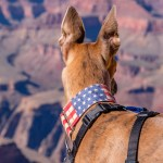 Kuiper looks out at the Grand Canyon. The dog is in focus.