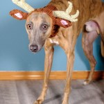 Kuiper is wearing a knitted hat with reindeer antlers and ears. He looks very dejected.