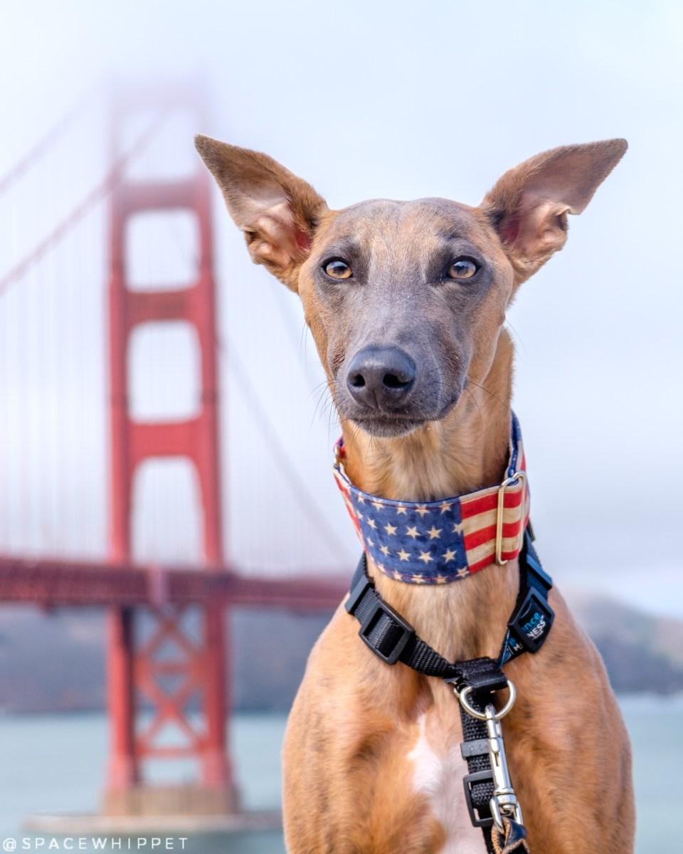 Headshot of Kuiper with Golden Gate Bridge. He is wearing an American flag collar.