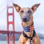Headshot of Kuiper with Golden Gate Bridge. He is wearing an American flag collar.