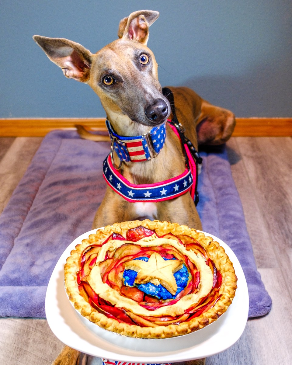 Kuiper poses with an America harness and collar in front of an apple pie shaped like Captain America's shield.