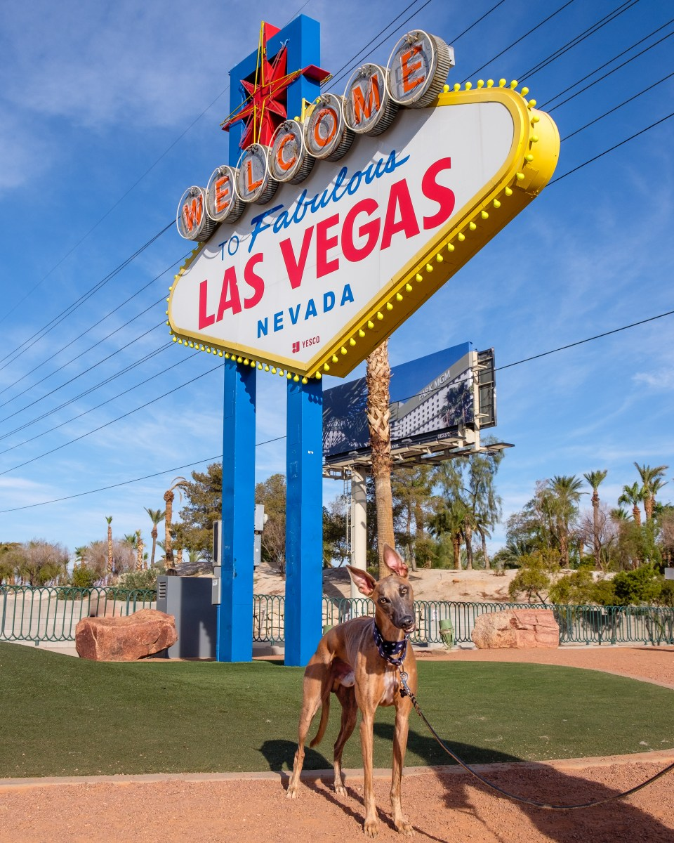 Kuiper tilts his head in front of the Welcome to Las Vegas sign