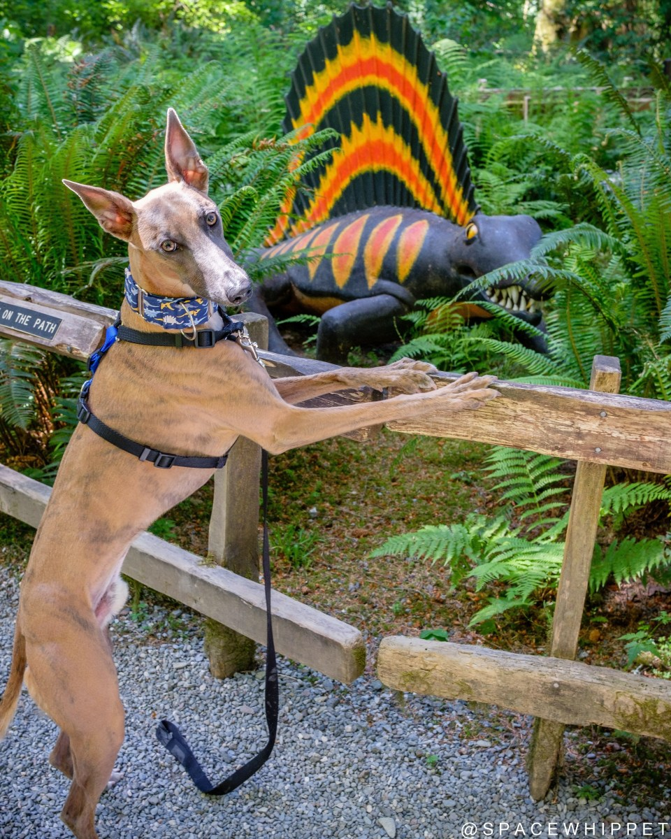 Kuiper poses with a dimetrodon statue. He is standing on his hind legs, with front legs on the railing.