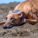 Kuiper relaxes on the beach.