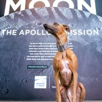 Kuiper sits in front of the Destination Moon exhibit sign. He is wearing a Moon collar.
