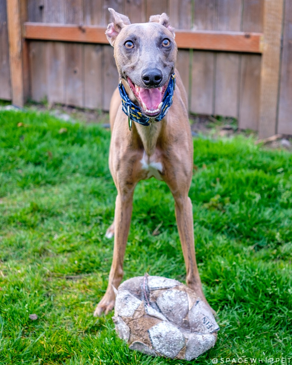 Kuiper beams happily with his soccer ball. It is dirty and deflated.