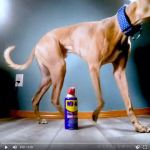 Still frame from video of Kuiper circling a can of WD40.