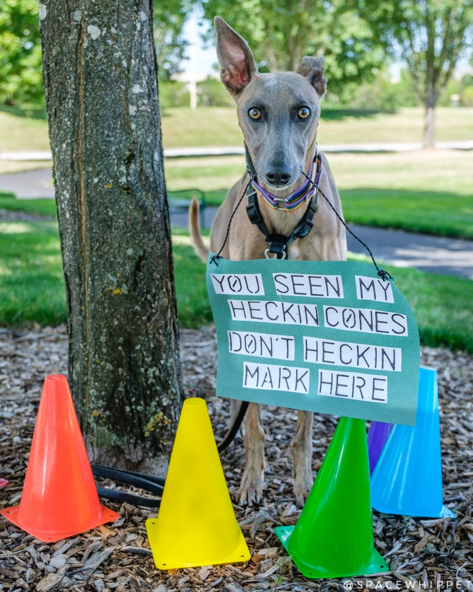 """Kuiper """"reserves"""" a tree with traffic cones. He holds a sign which says, """"You seen my heckin cones. Don't heckin mark here."""""""