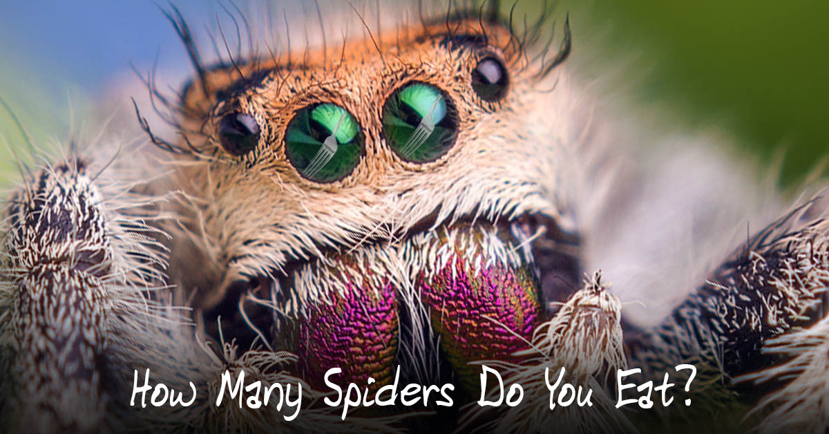 How Many Spiders Do You Swallow In A Year