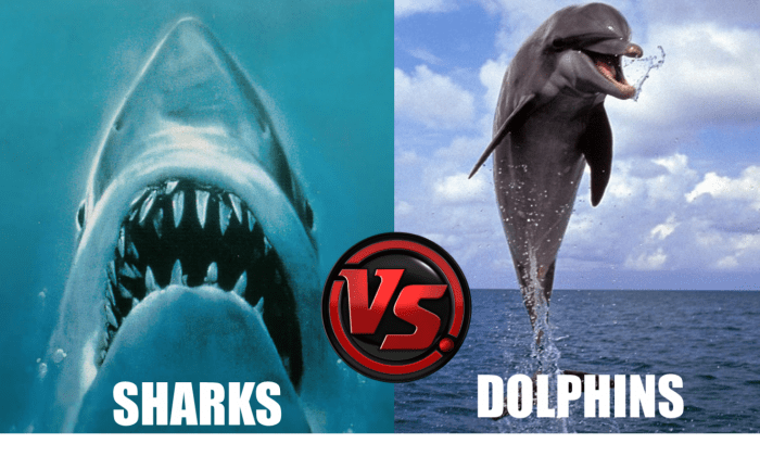 sharks_vs_dolphins