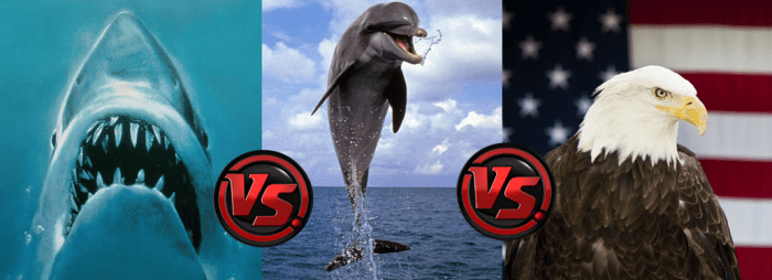 sharks_vs_dolphins_vs_eagles