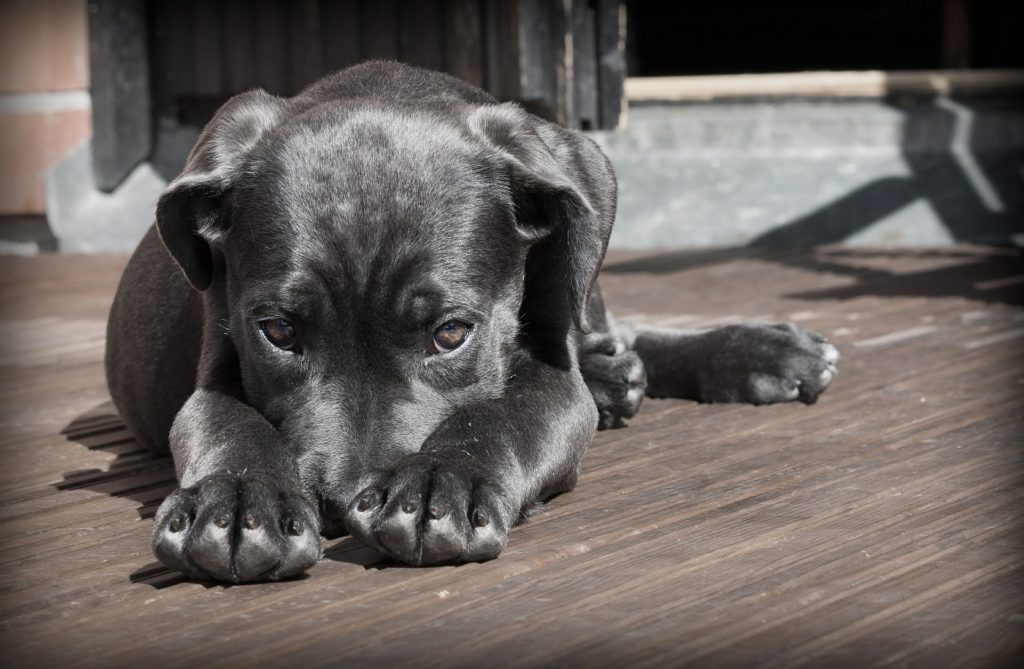 cute dog laying on a deck