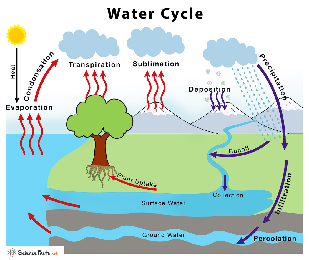 Water Cycle Definition Amp Steps Explained With Simple Diagram