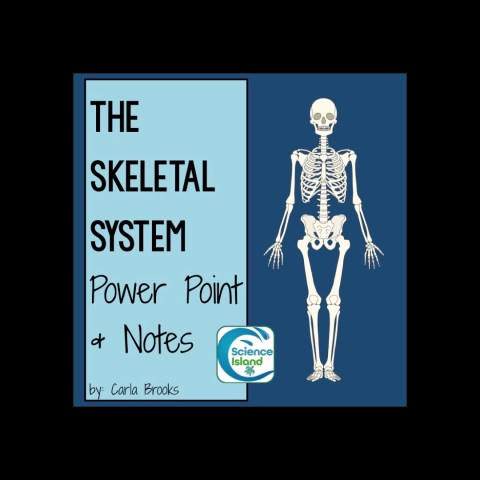 Skeletal System PowerPoint and Notes