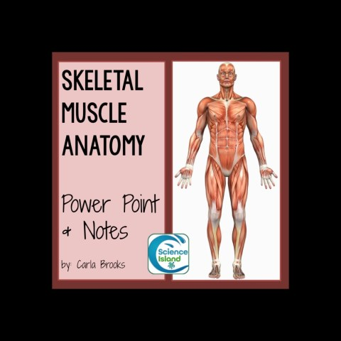 Skeletal Muscle Anatomy PowerPoint and Notes