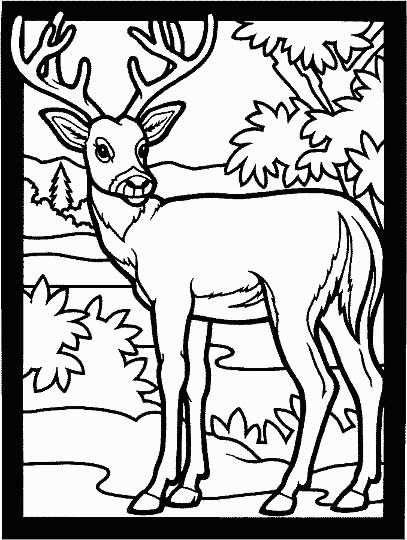 deer coloring page for kids  free printable picture