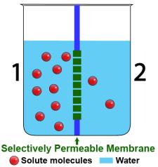Osmosis Tutorial 2: Osmotic Pressure, Interactive Diagrams ...