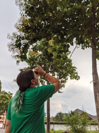 Priscilla Miard looking up into a tree