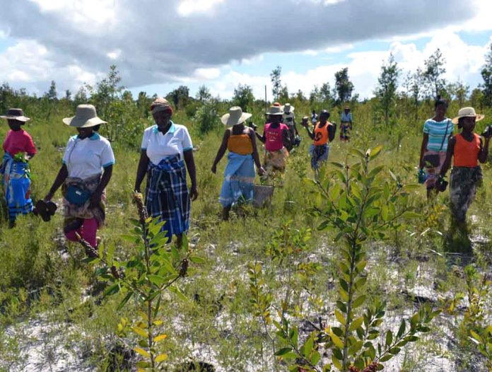 a group of people walking through an area with saplings