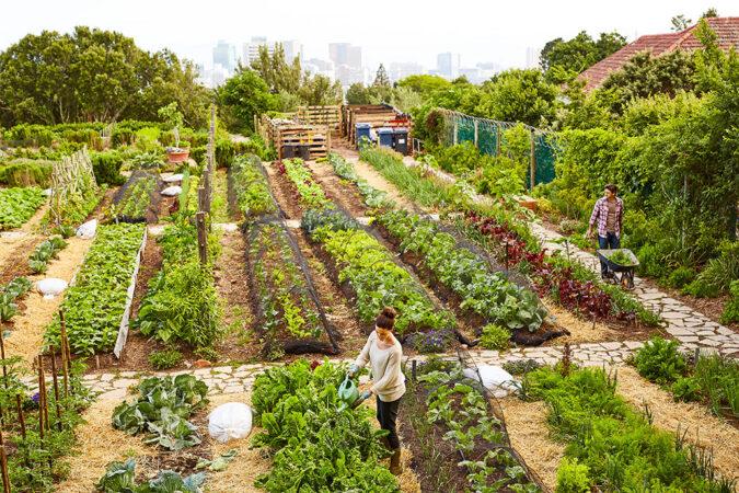 an overhead shot of an urban garden