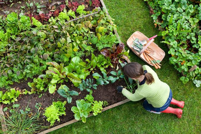 an overhead photo of a woman weeding a garden