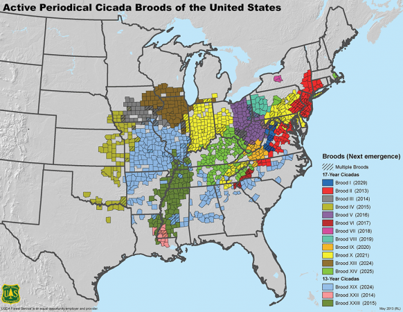 a map showing 15 different broods of periodical cicadas and their emergent years