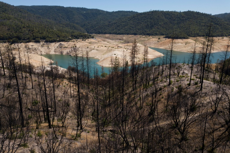 Burnt trees standing on May 25, 2021 at the heights of Lake Oroville in Northern California, are reminiscent of the increased risk of drought-related fires (AFP - Patrick T. FALLON)