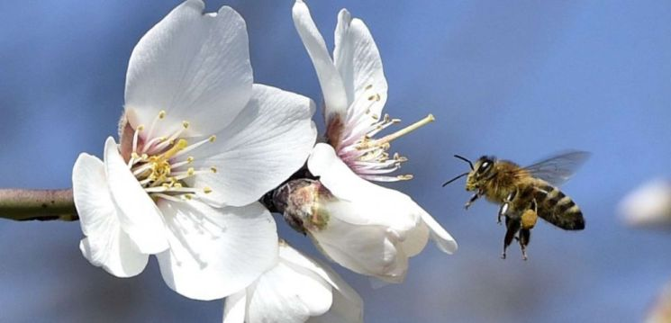 """Résultat de recherche d'images pour """"abeille"""""""