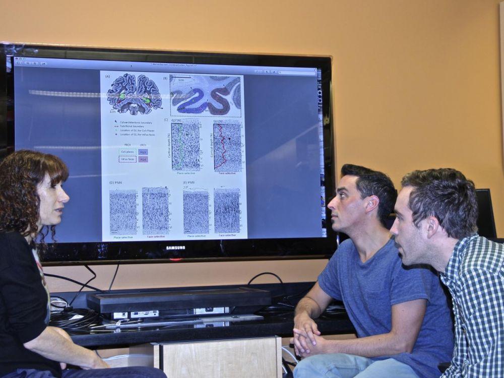 Les chercheurs de Stanford  ont repéré une zone cérébrale qui croît