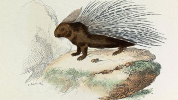 Des ponts terrestres pour que la faune colonise les Antilles