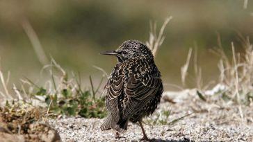 Comptage national des oiseaux les 29 et 30 mai 2021