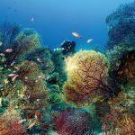 Ces Etats qui sauvent la Méditerranée