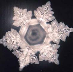 emoto water experiment