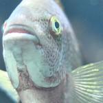 Wat zegt een vis op grote diepte?