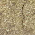 Oudste tunnels van wormen ontdekt