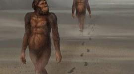 voorouder