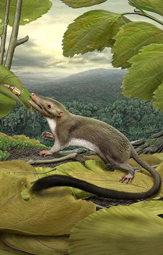 Zo heeft de hypothetische voorouder er waarschijnlijk uitgezien. Afbeelding: Carl Buell.