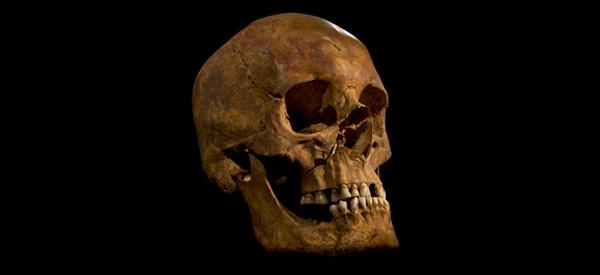 De teruggevonden schedel. Foto: University of Leicester.