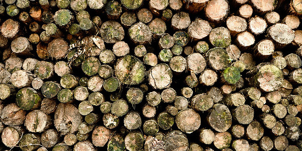 """Bomen omzagen om ruimte te maken voor gewassen waar biobrandstof uit gemaakt kan worden: een slecht idee. Foto:  Wagner T. Cassimiro """"Aranha"""" (cc via Flickr.com)."""