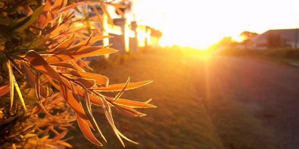 plant zonopkomst