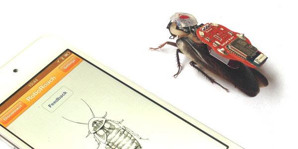 robotkakkerlak