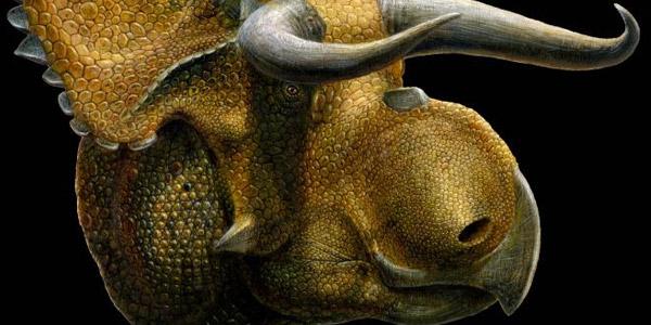 dinosaurus-neus