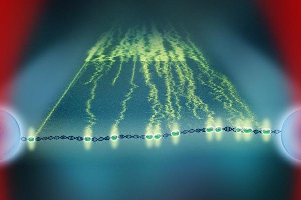 Eiwitten dansen op DNA. De 'paden' erachter laten zien welke weg de eiwitten hebben afgelegd. Afbeelding:  Ivo van der Ent.